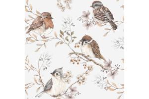 Oiseaux white gray